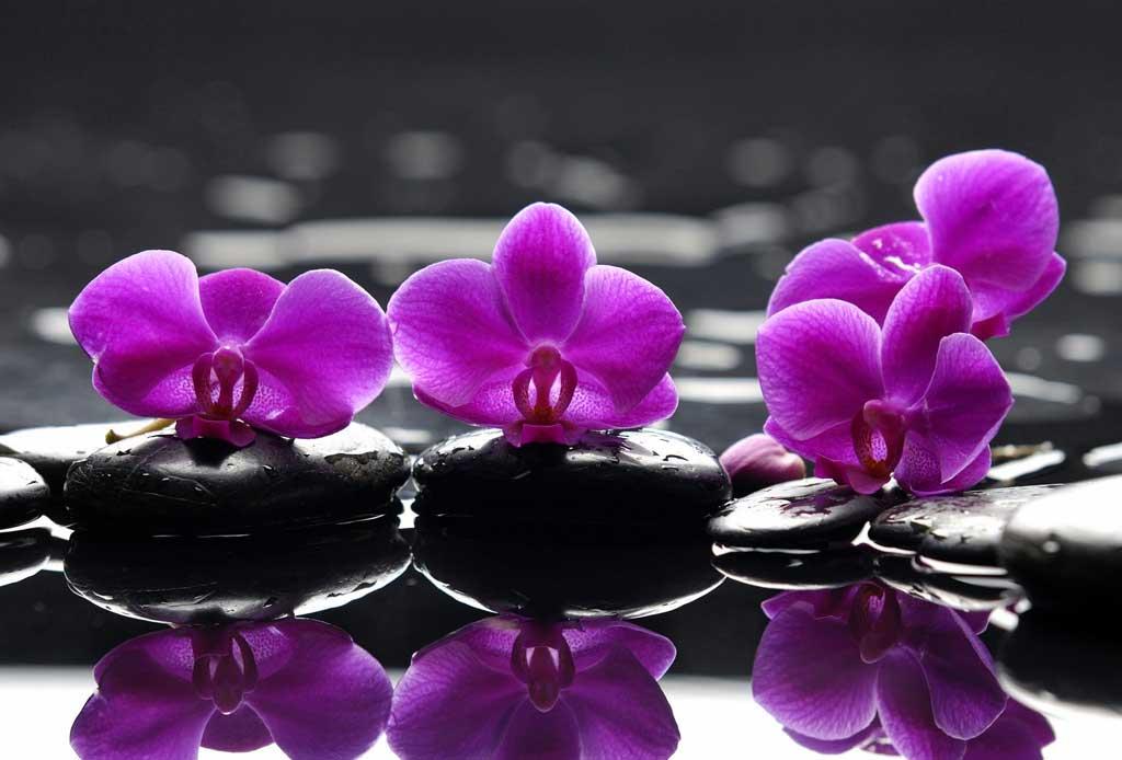 Los 6 pasos infalibles para cuidar una orquídea - orquideas-4