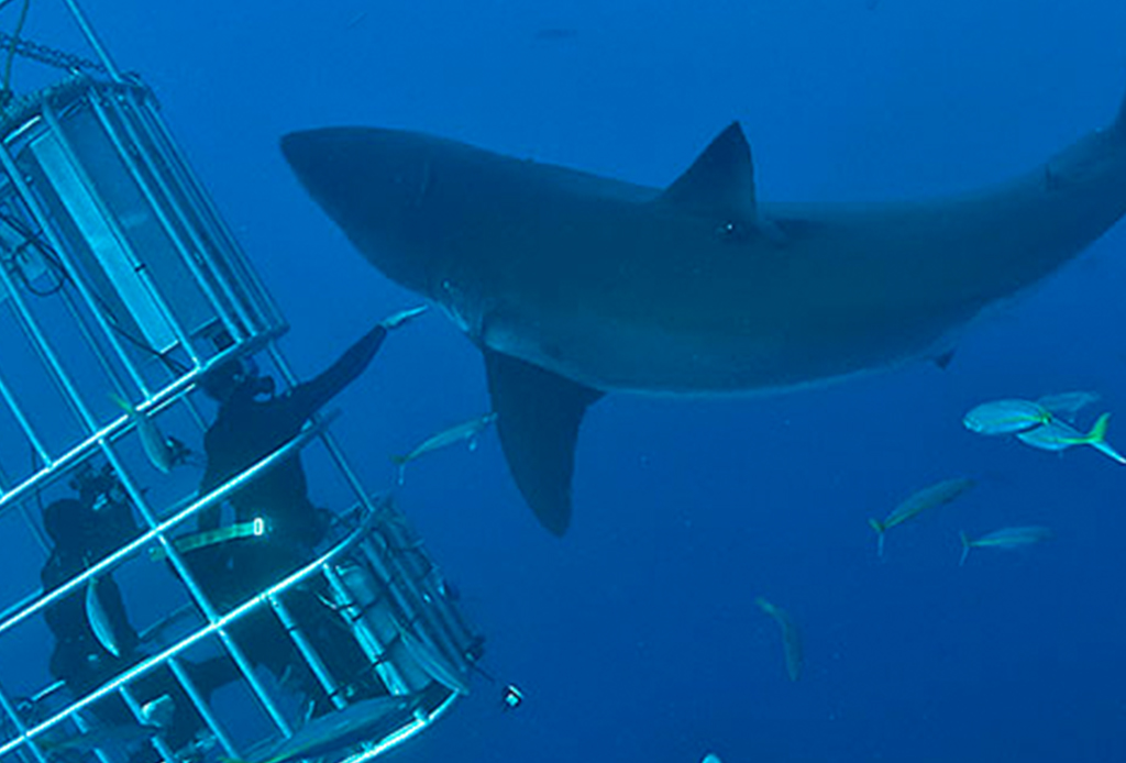 Los deportes extremos que debes hacer antes de morir - tiburon