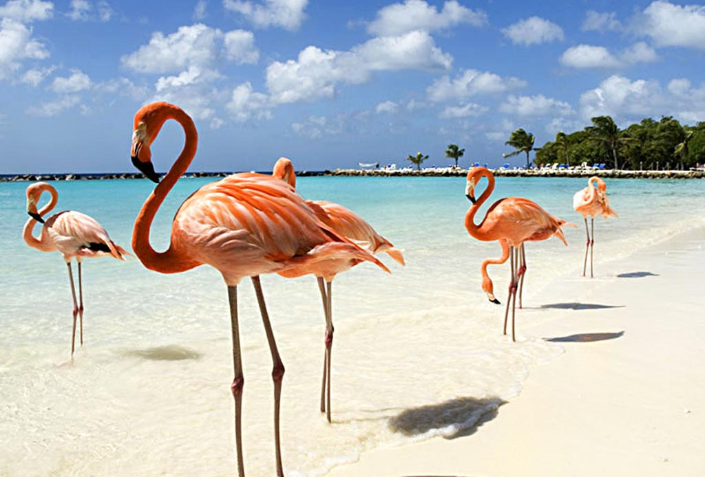 10 razones para ir a Aruba con tu pareja lo más pronto posible