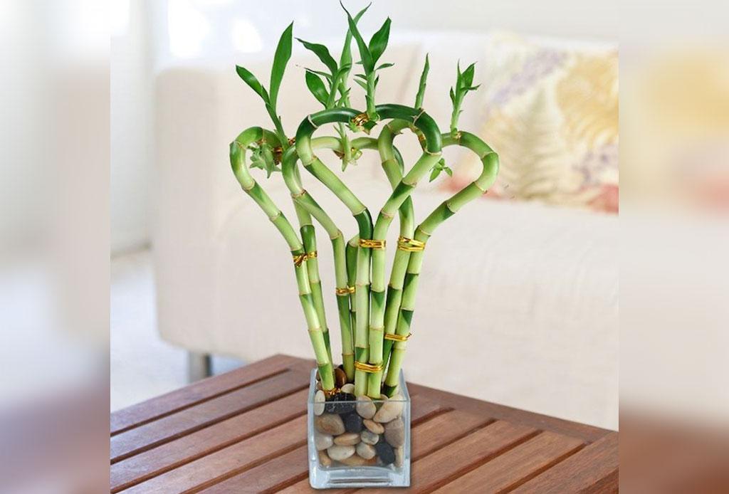 Adiós al estereotipo de 'Cat Lady', lo de hoy es ser 'Plant Lady' - bambu