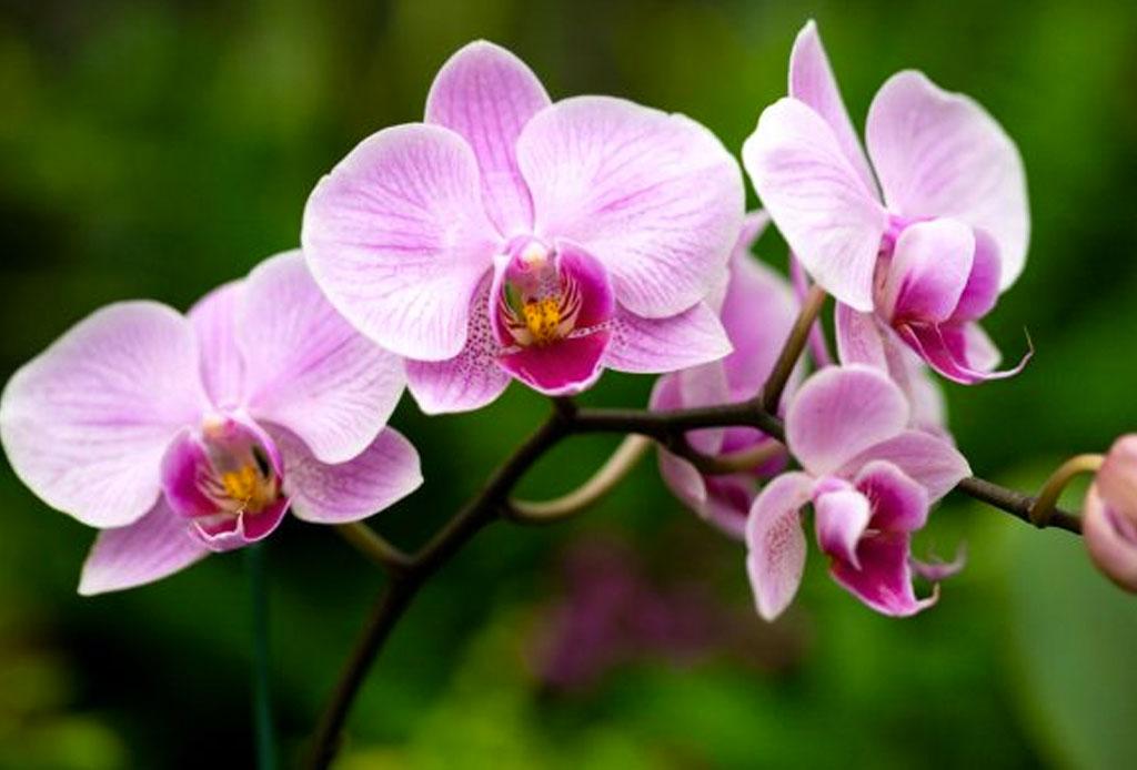 Adiós al estereotipo de 'Cat Lady', lo de hoy es ser 'Plant Lady' - orquidea