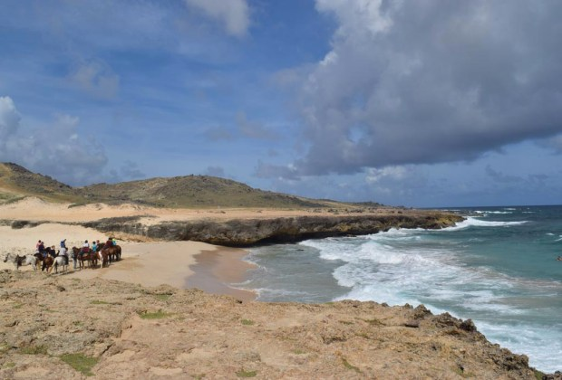 6 actividades de ecoturismo para hacer en Aruba - aruba-ecoturismo-caballos-1024x694