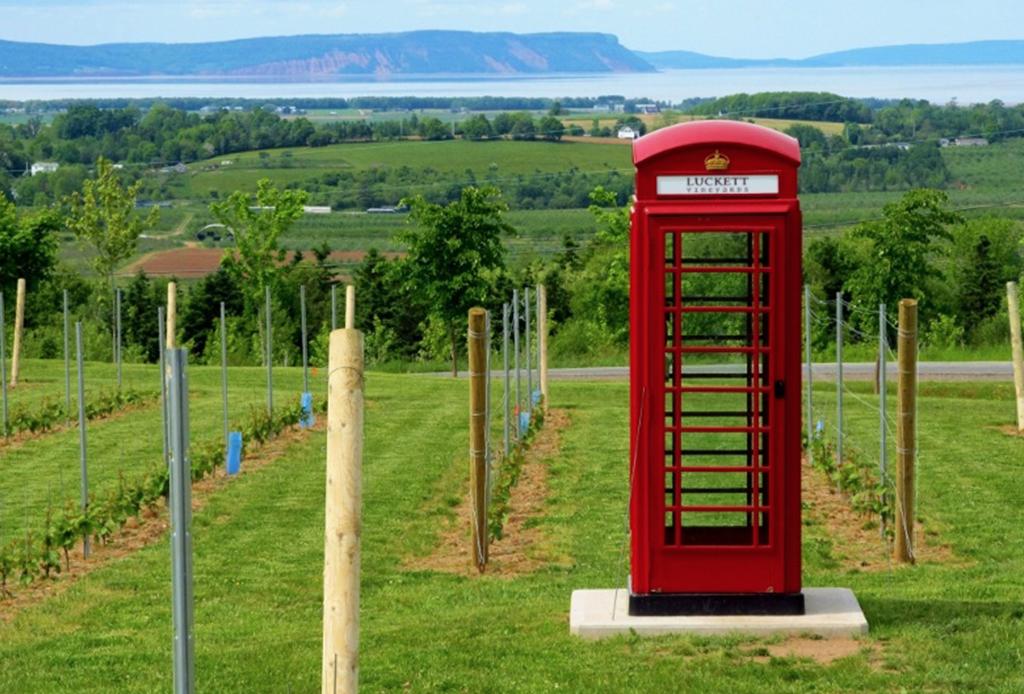 ¡Descubre la ruta del vino canadiense! - can-an