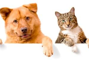 6 beneficios de tener una mascota en casa
