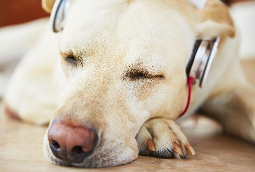 7 Juegos para entretener a tus perros en casa durante la cuarentena - musica-perro-2-1024x694