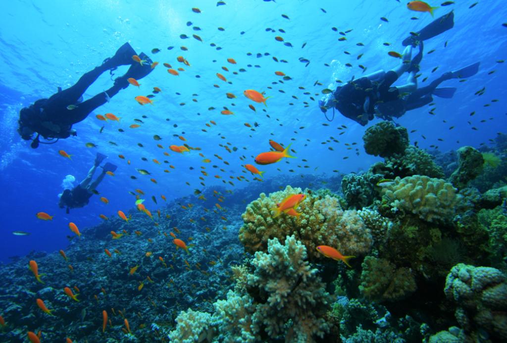 Recorre México como nunca antes: bajo el mar - buceo-islas-marieta
