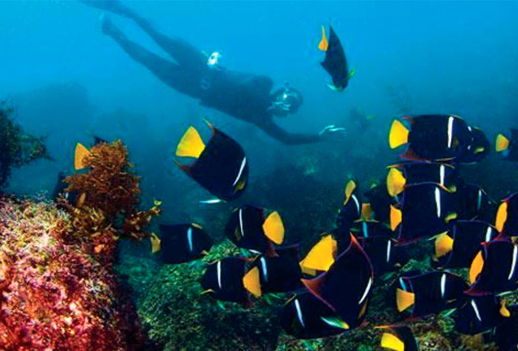 Recorre México como nunca antes: bajo el mar - buceo-san-carlos