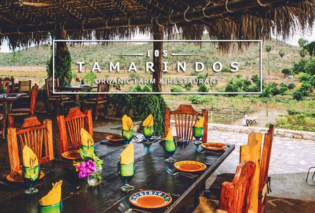 Restaurantes mexicanos inspirados en el concepto farm-to-table - f-tamarindos