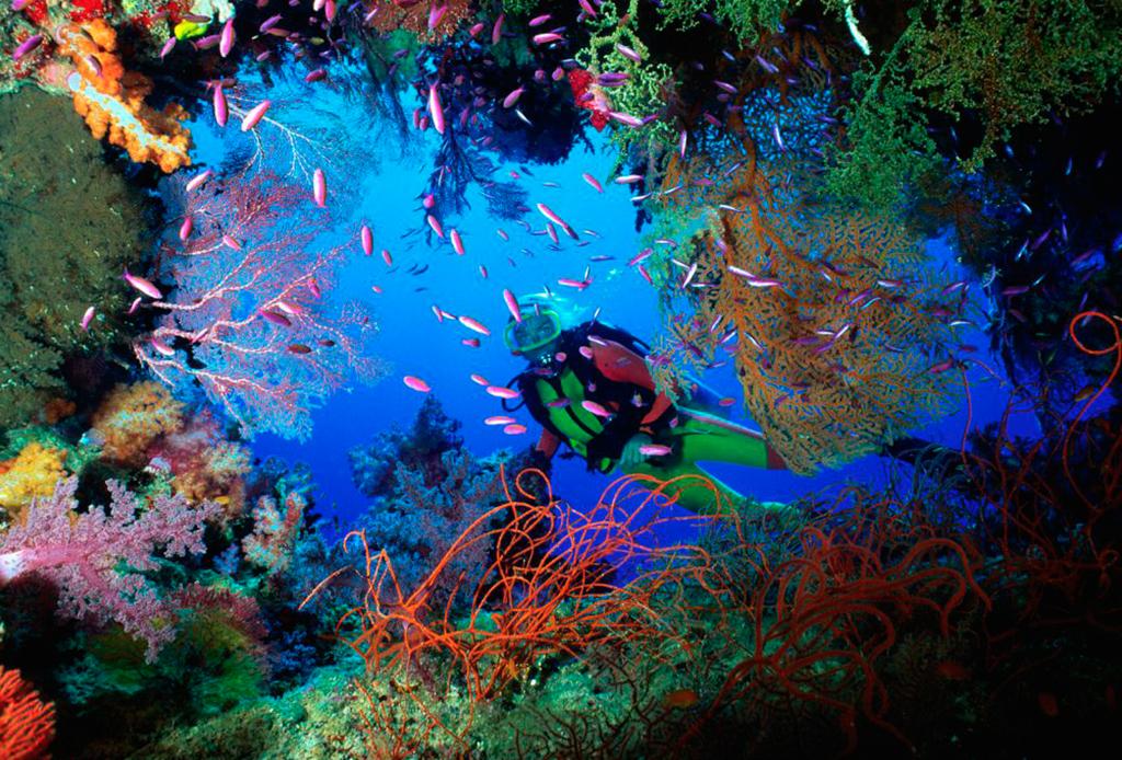 Recorre México como nunca antes: bajo el mar - la-paz-buceo