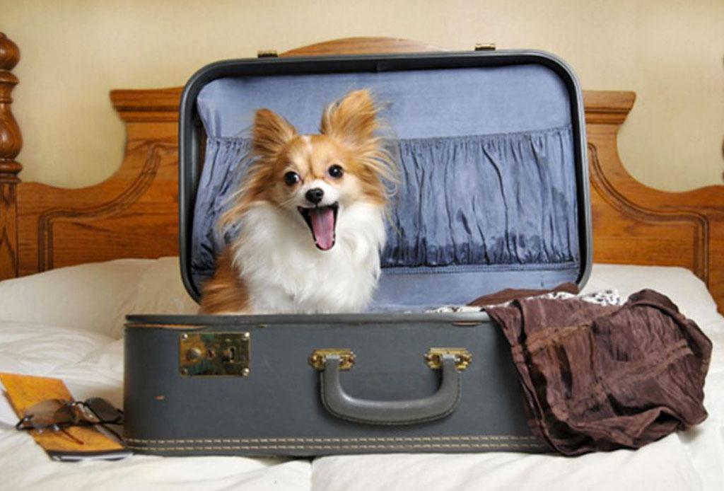 ¿Saldrás de viaje? Encuentra hospedaje para tu perro en la CDMX - cuida-mascota-1