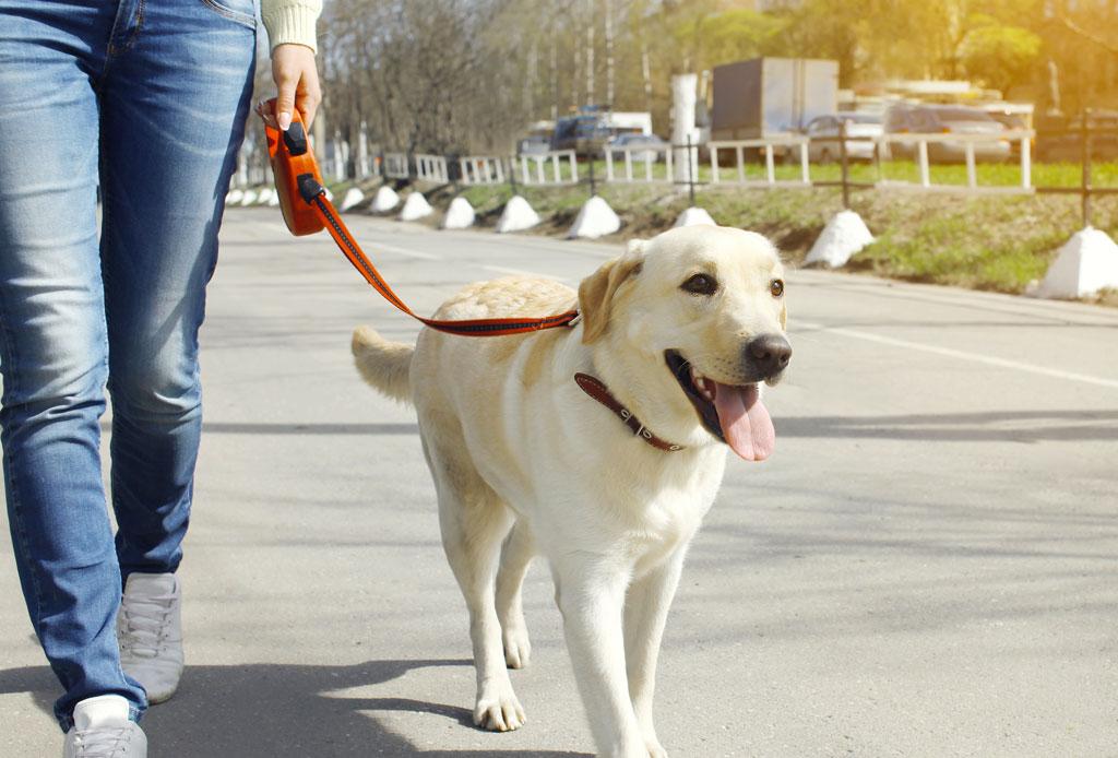 ¿Saldrás de viaje? Encuentra hospedaje para tu perro en la CDMX - hospedaje-mascota-3