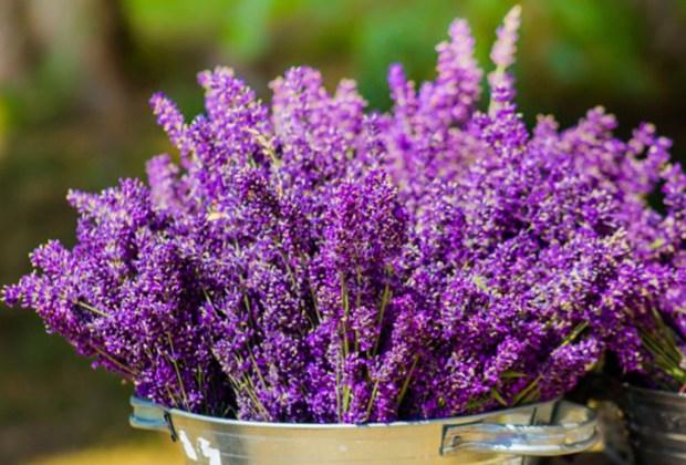 Tener estas plantas en tu cuarto te ayudará a dormir mejor - lavanda-1024x694