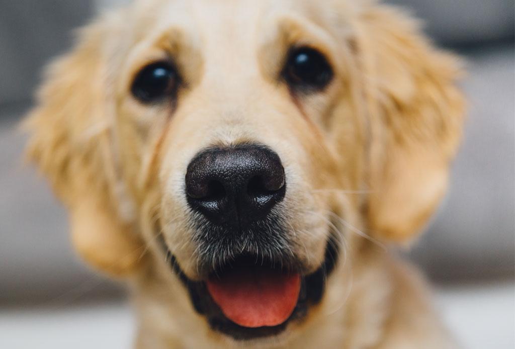 """¡Atención humano! A los perros adultos no les gusta que les hables como """"bebés"""" - cachorro-perro"""