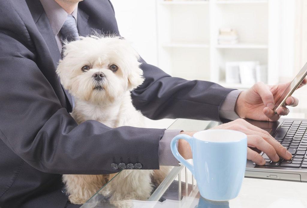 Consejos para convertir tu oficina en un lugar pet friendly - oficina-pet-friendly-7