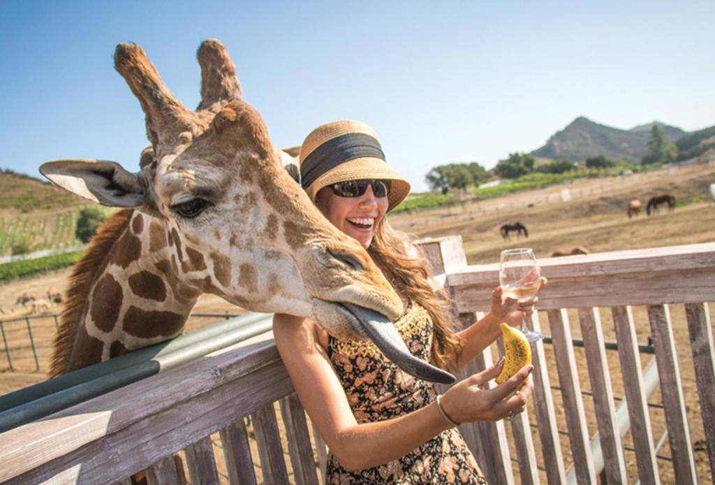 Malibu Wines Safari: el viñedo rodeado de animales salvajes