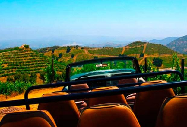 Malibu Wines Safari: el viñedo rodeado de animales salvajes - safari-1024x694