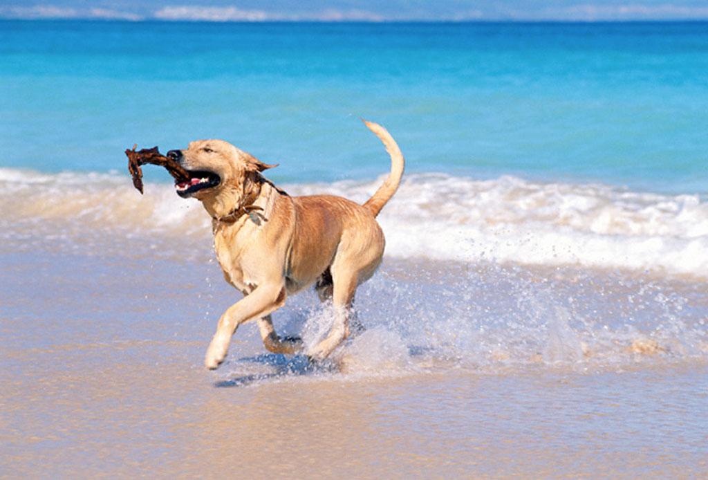 Sorprende a tu mascota con estos regalos de Navidad - playa-perros-2