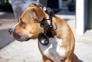 La creación de un traductor para perros y gatos está en camino