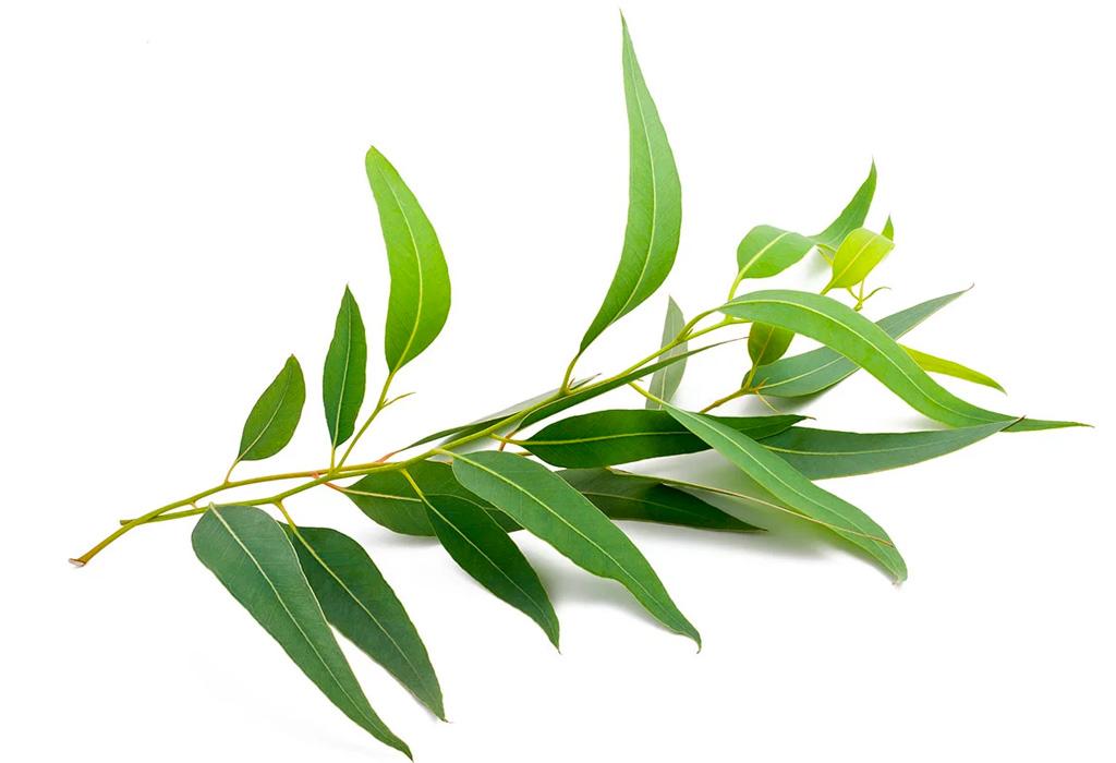 Descubre los diferentes significados de la aromaterapia - eucalipto
