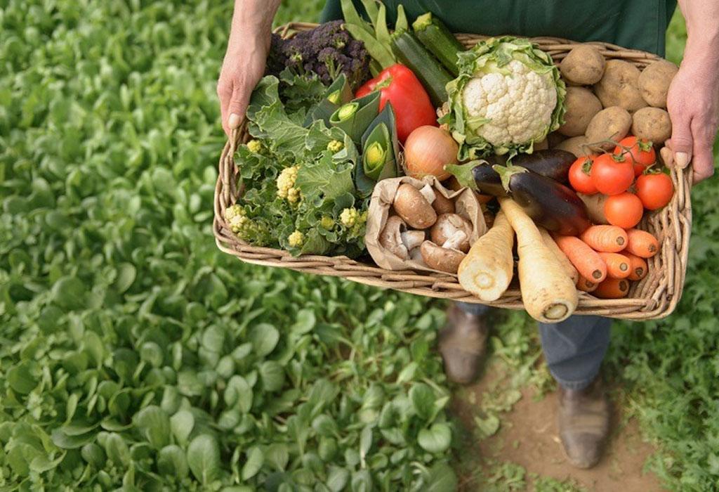 DIY: Crea tu propio huerto orgánico - huerto-organico-dos