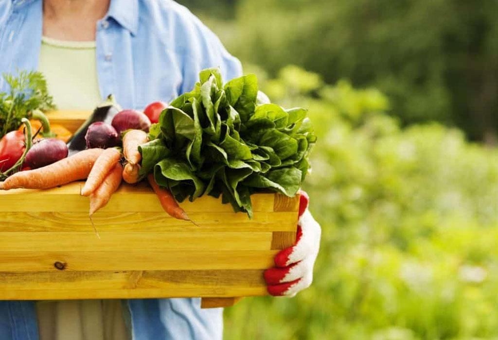 DIY: Crea tu propio huerto orgánico - sabanaas-de-oro