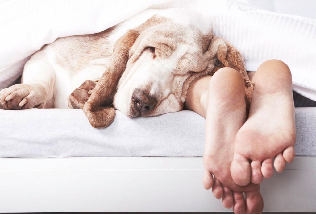 ¿Sabías que el box es una buena idea para combatir el estrés? - perro-dormir-3-1024x694