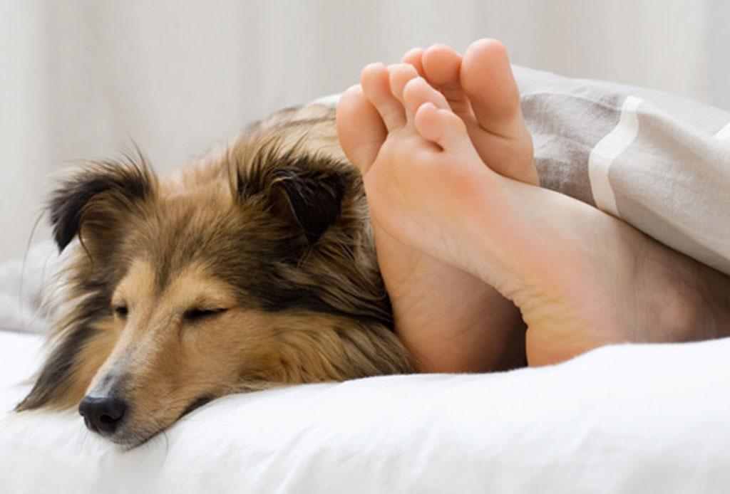 No le temas al coronavirus, aquí algunos tips para lidiar con tu ansiedad - perro-dormir-1024x694