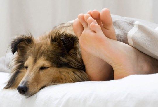 ¿Sabías que dormir en una habitación fría tiene varios beneficios para tu salud? - perro-dormir-300x203
