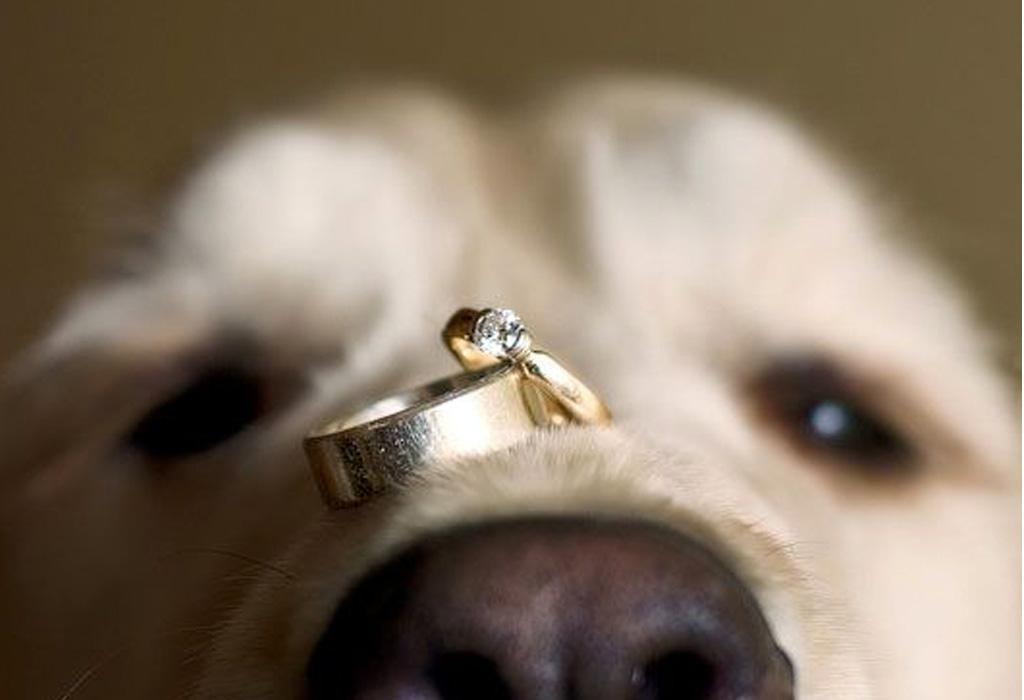 ¿Cómo puedes incluir a tu perro en tu boda? - doggg