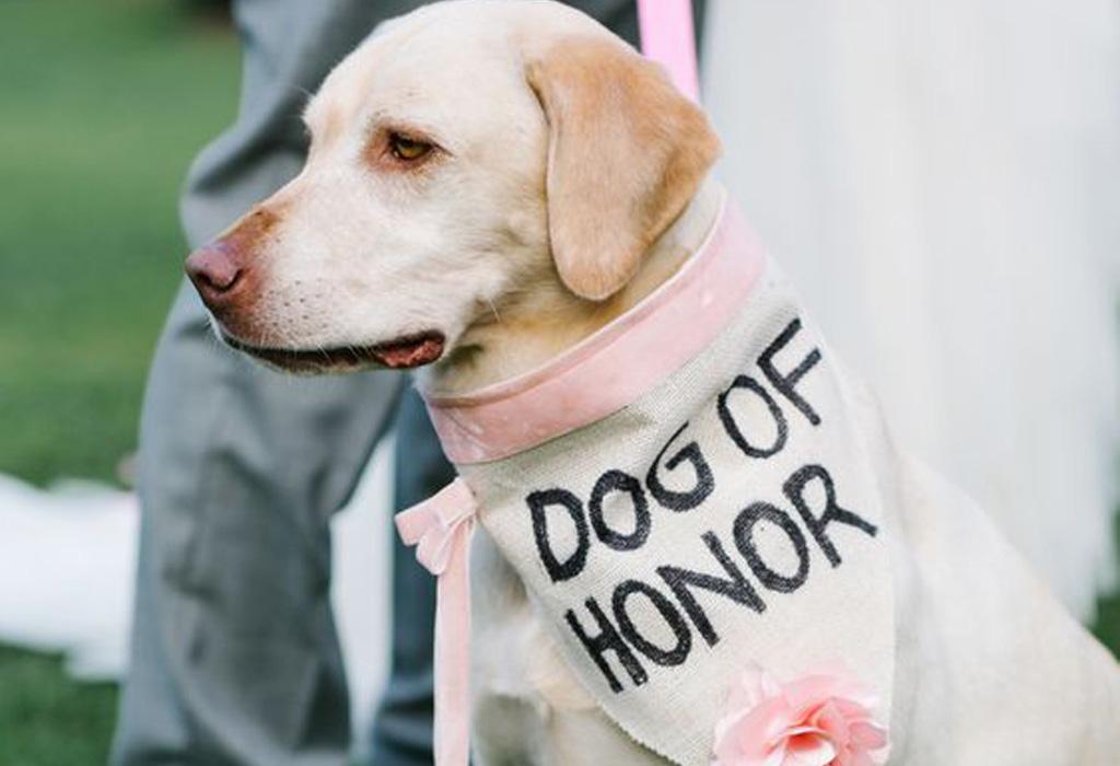 ¿Cómo puedes incluir a tu perro en tu boda? - doghonor