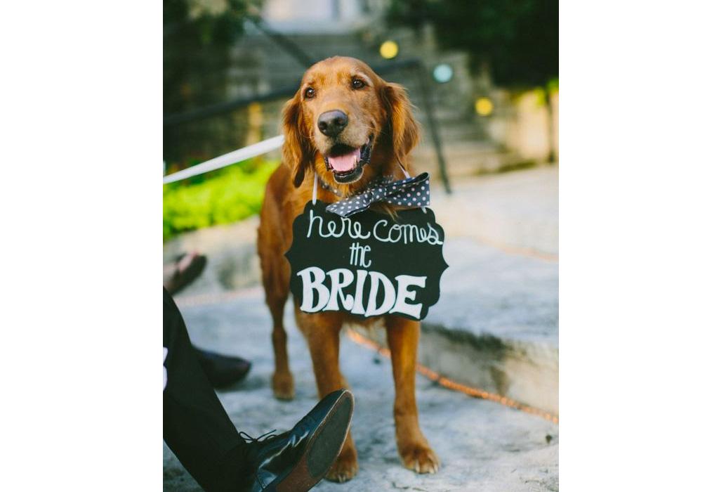 ¿Cómo puedes incluir a tu perro en tu boda? - herecomes-the-bride