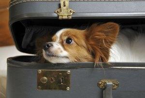 Te decimos dónde dejar a tu perro si te vas de vacaciones