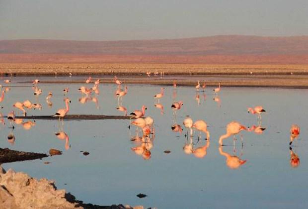 Estos son los mejores espejos de sal alrededor del mundo - ata-1024x694