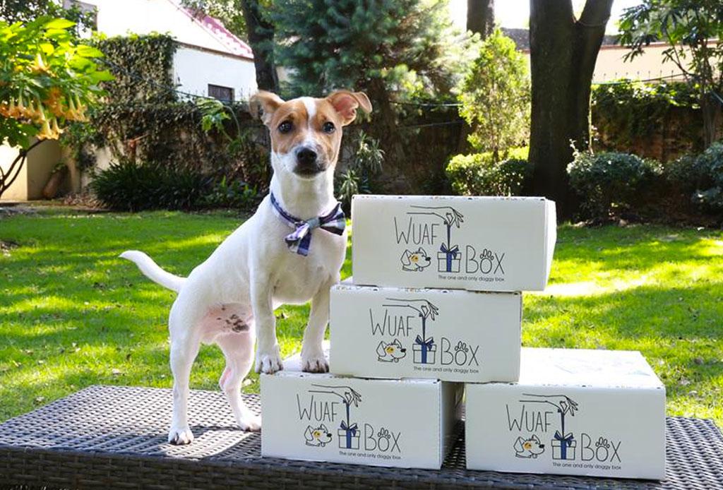 Sorprende a tu mascota con estos regalos de Navidad - caja-de-suscripcion-perros