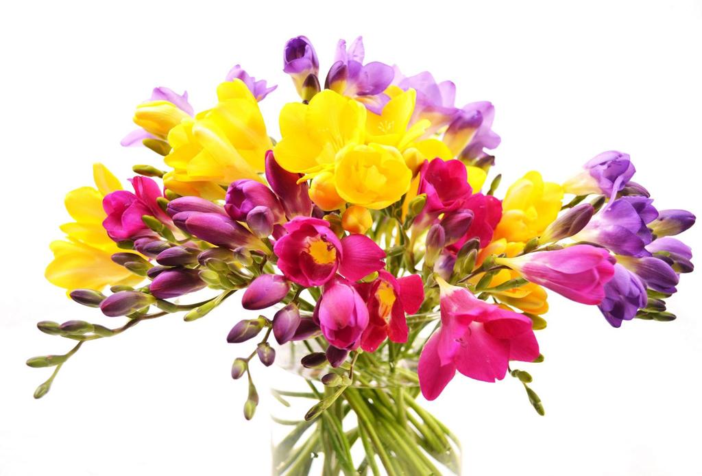 5 cosas que NO deberías regalar esta temporada a las mujeres de tu vida - flores-1