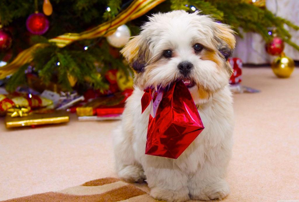 Estas fiestas NO regales una mascota, ¡te decimos por qué!