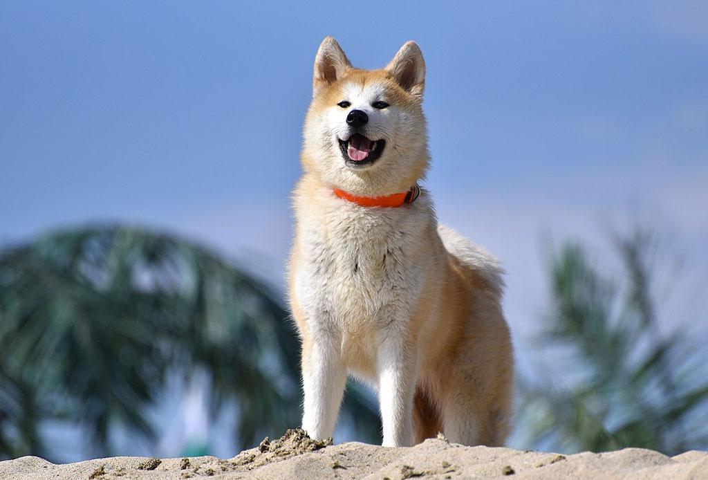 Los países más dog friendly de Latinoamérica