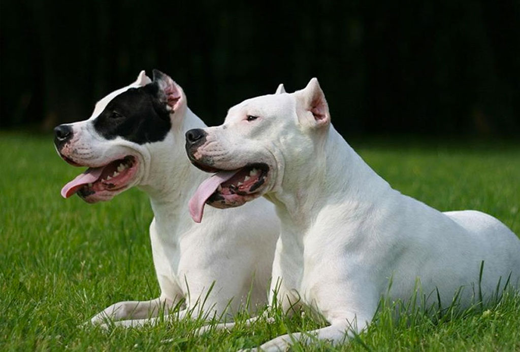 Los países más dog friendly de Latinoamérica - dog_friendly_2