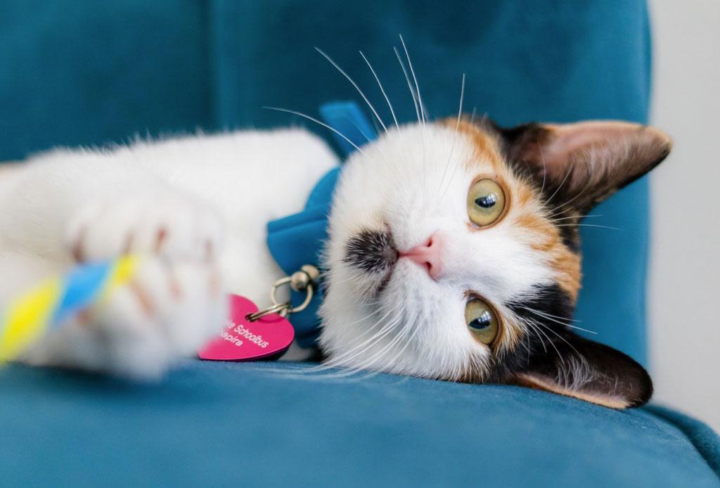 Fact: los gatos pueden tener cualquiera de estas 5 personalidades - gato-5