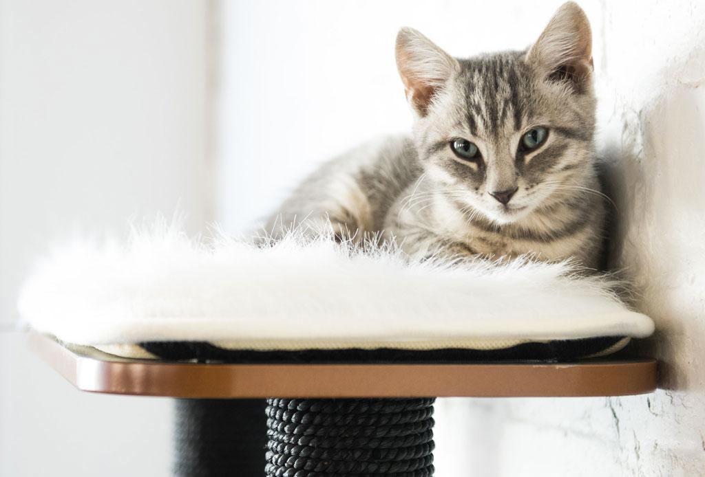Fact: los gatos pueden tener cualquiera de estas 5 personalidades - gato-6