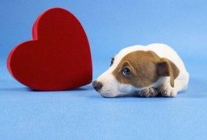 ¡Cuidado! Te decimos por qué San Valentín no le va bien a tu mascota