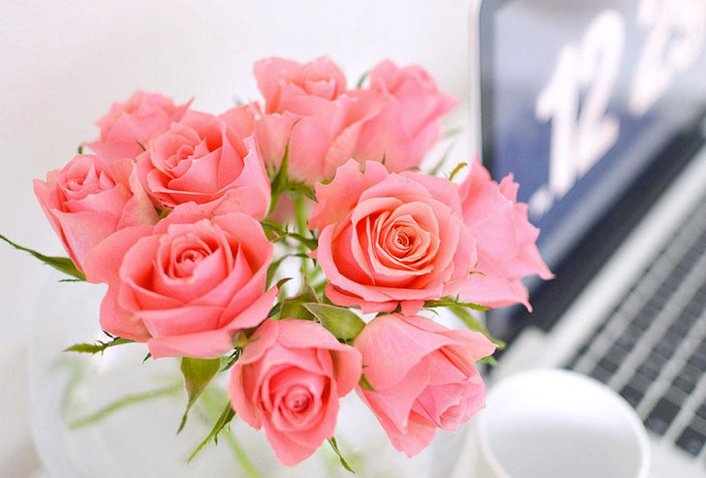 Decora tu workspace con estas flores que durarán más de una semana - rosas