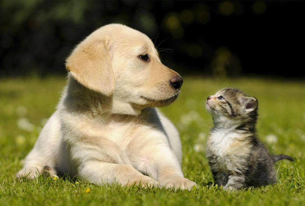 Toma en cuenta TODOS estos puntos antes de adoptar una mascota - adoptar_mascota_3