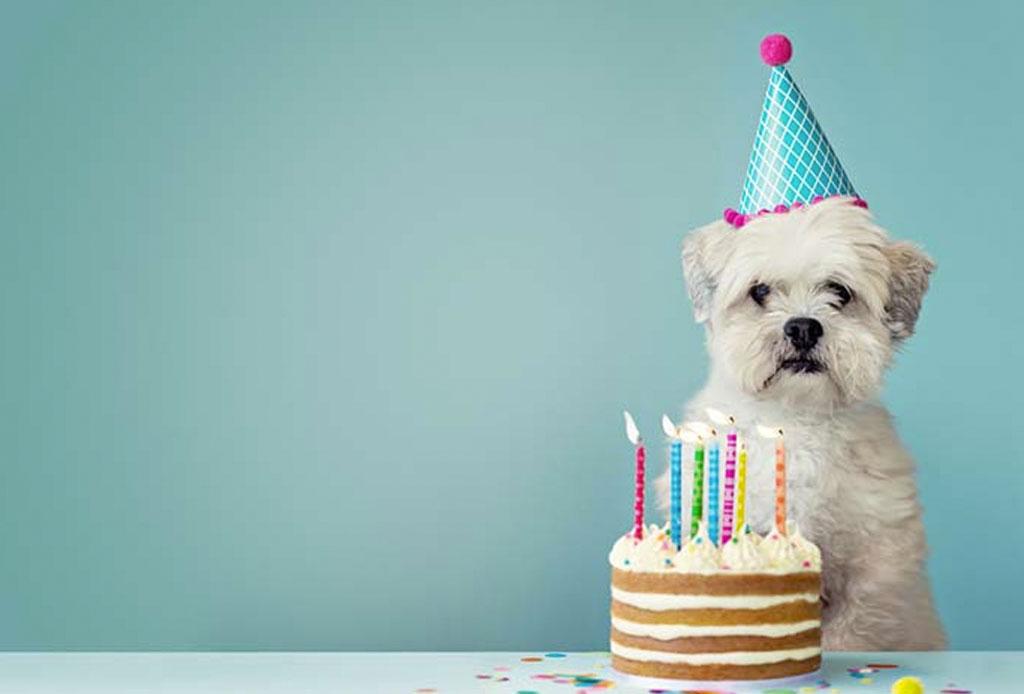 Los alimentos y bebidas que todo perro foodie debería probar - alimentos-y-bebidas-perro-foodie-5