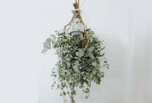 Poner plantas en tu regadera aporta beneficios a la salud