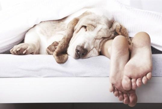 ¿Crees estar obsesionado con tu perro? ¡Checa cuántas cosas de esta lista haces! - senales-obesionado-perro-in-good-way-12-300x203
