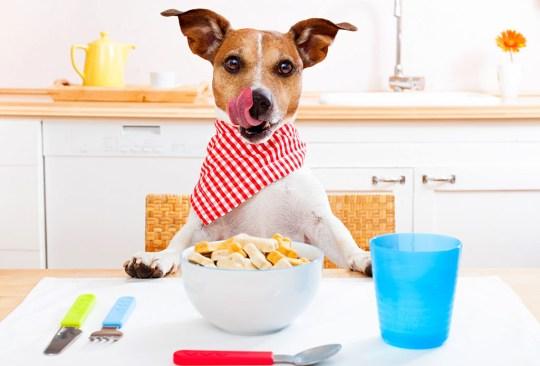 ¿Crees estar obsesionado con tu perro? ¡Checa cuántas cosas de esta lista haces! - senales-obesionado-perro-in-good-way-4-300x203
