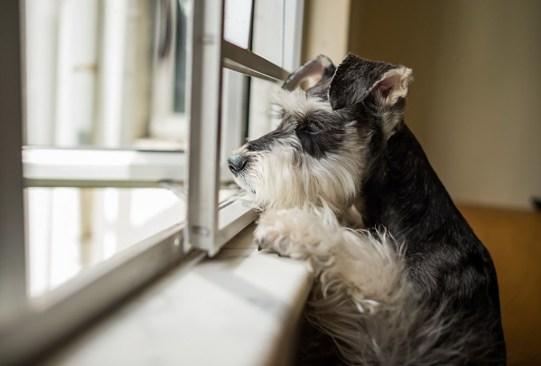 Estos son los cuidados para tu perro en épocas de lluvia - consejos-cuidados-perro-epoca-lluvia-6-300x203