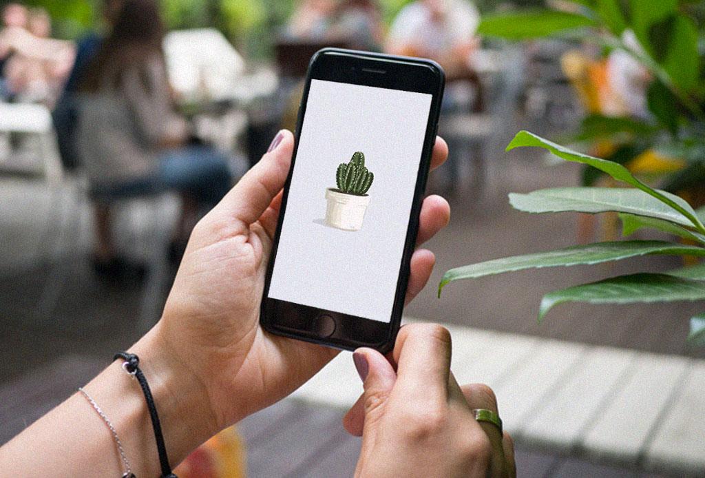 ¿Eres fan de las plantas? Estos fondos de pantalla para celular son para ti