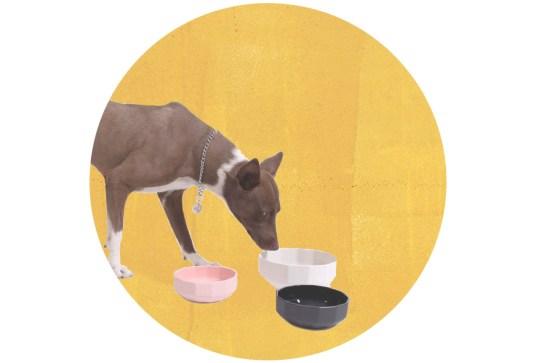 Seleccionamos originales comederos para tu perro - platos-cool-perro-2-300x203